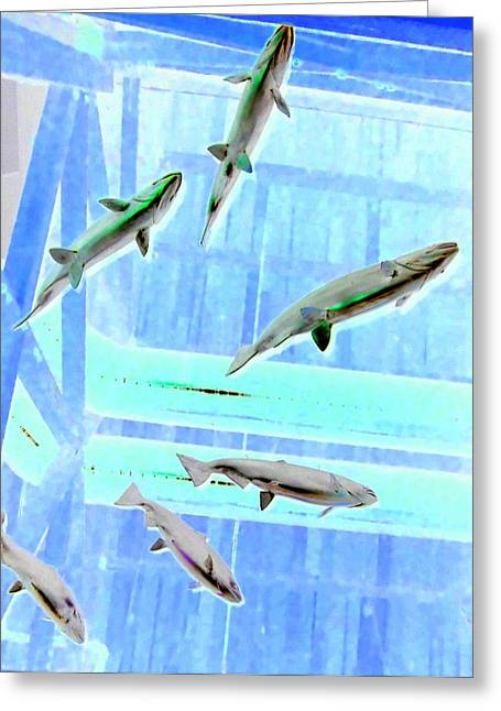 Flying Fish Greeting Cards - Flying Fish 2 Greeting Card by Randall Weidner