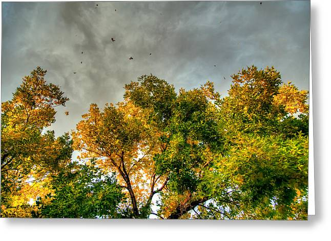 Flying Leaves Greeting Card by Stephen  Johnson