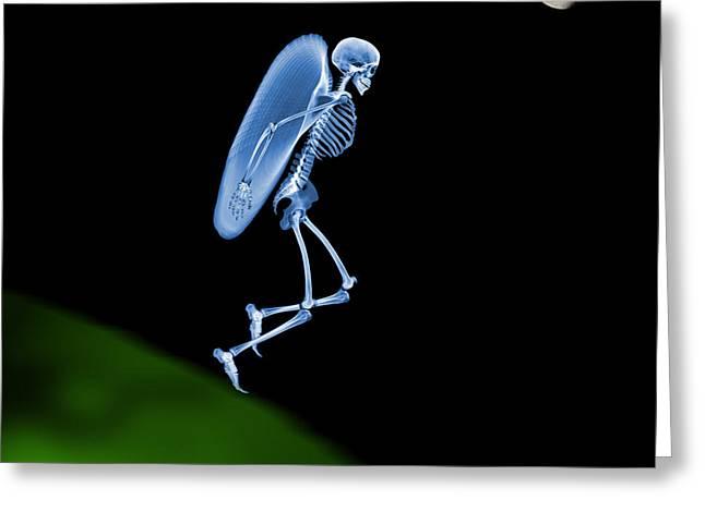 Human Spirit Greeting Cards - Flying Skeleton Greeting Card by D. Roberts