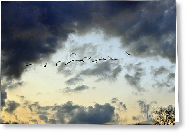 Large Birds Greeting Cards - Flying South for the Winter Greeting Card by Paul Ward