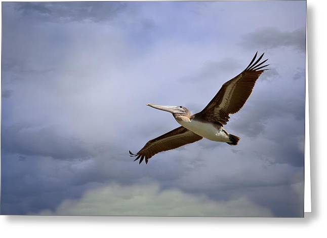 Pelicans Flying Greeting Cards - Flying Through The Tempest Greeting Card by Fraida Gutovich