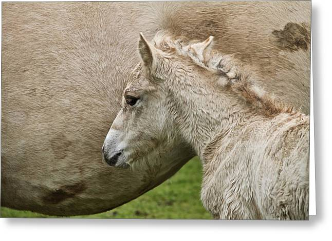 Foal Greeting Card by Odd Jeppesen