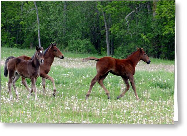 Bred Mixed Media Greeting Cards - Foals In Dandelions Greeting Card by Bruce Ritchie