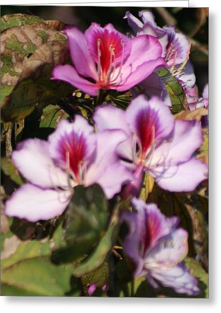 Pinks And Purple Petals Photographs Greeting Cards - Focused and Blurred Blossoms Greeting Card by Maria Young