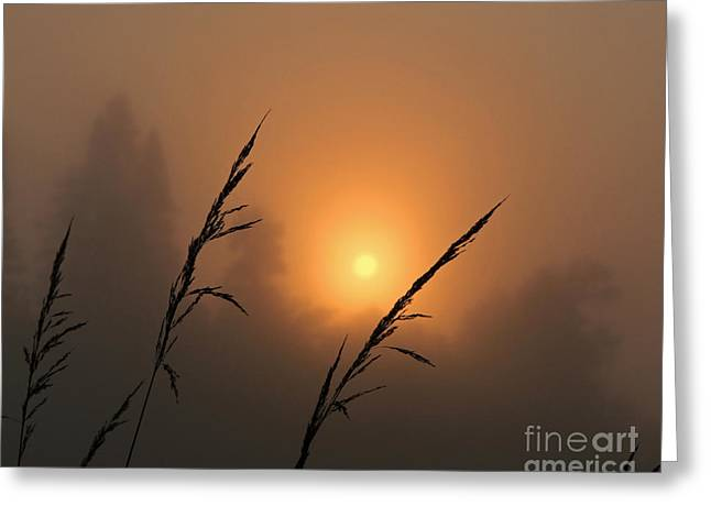 Lloyd Alexander Greeting Cards - Fog and Sunrise Greeting Card by Lloyd Alexander