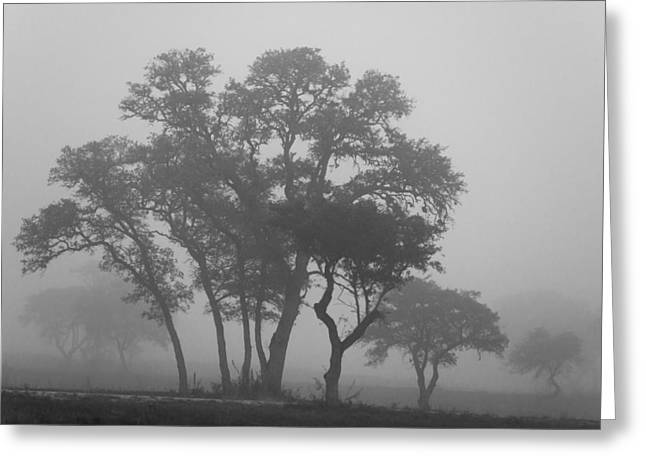 The Hills Greeting Cards - Fog and Trees Greeting Card by Paul Huchton