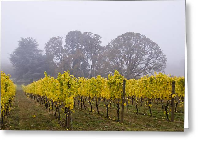 Jean Noren Greeting Cards - Fog in the Fall Greeting Card by Jean Noren