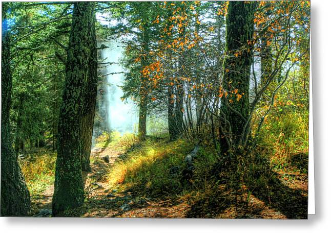 Myeress Greeting Cards - Fog in the Woods Greeting Card by Joe Myeress