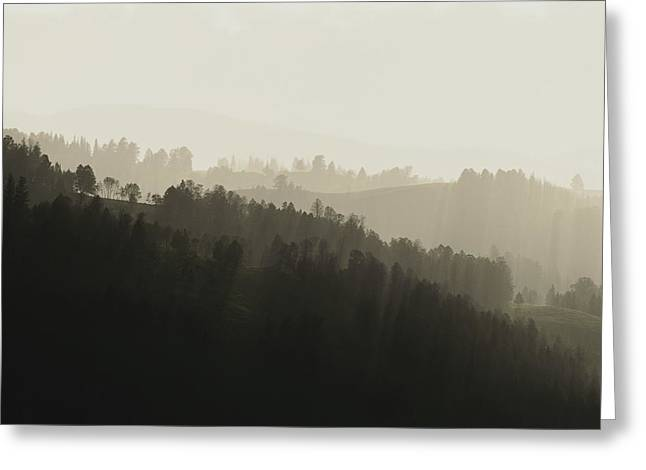Light And Dark Greeting Cards - Fog Shrouds Lodgepole Pine Tree-covered Greeting Card by Tom Murphy