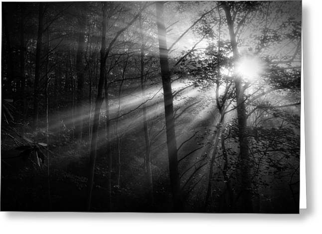 Foggy Forest Greeting Card by Matt  Trimble