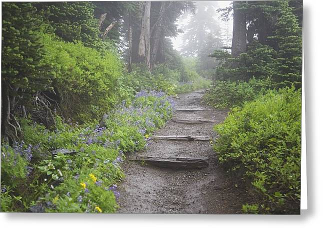 Foggy Day Greeting Cards - Foggy Forest Path Greeting Card by Craig Tuttle