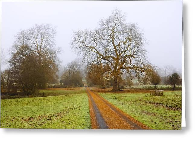 Magneta Greeting Cards - Foggy Landscape Greeting Card by Svetlana Sewell