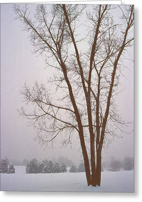 Bare Trees Mixed Media Greeting Cards - Foggy Morning Landscape 13 Greeting Card by Steve Ohlsen