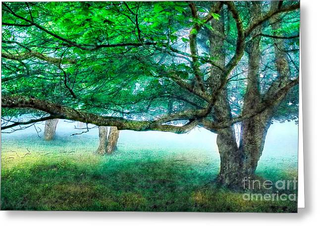 Virginia Artists Greeting Cards - Foggy Morning Under the Trees at Rocky Knob Greeting Card by Dan Carmichael