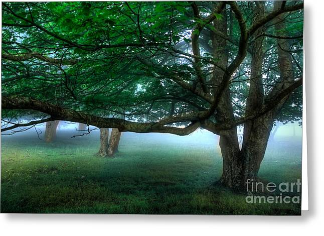 Virginia Artists Greeting Cards - Foggy Morning Under the Trees at Rocky Knob II Greeting Card by Dan Carmichael