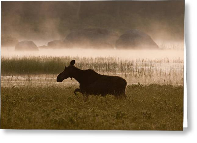 Brent L Ander Greeting Cards - Foggy Stroll Greeting Card by Brent L Ander