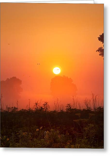 Wild Geese Greeting Cards - Foggy Sunrise In The Prairie Greeting Card by Steve Gadomski