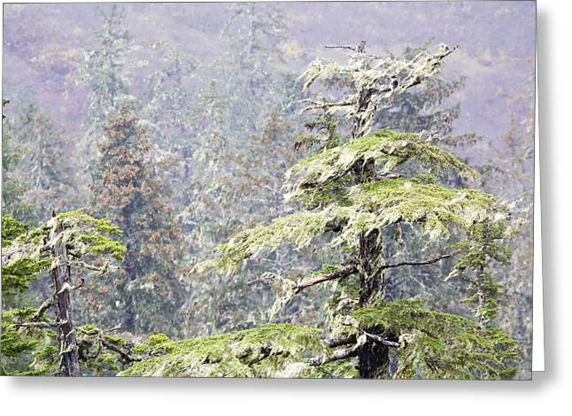 Sitka Greeting Cards - Foggy Tongass Rain Forest Greeting Card by Eggers   Photography
