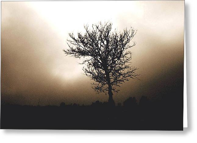 Foggy Winter Morning Greeting Card by Ann Powell