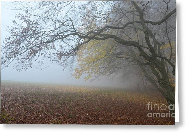Autumn Sheets Greeting Cards - Fogy Forest In The Morning 1 Greeting Card by Bruno Santoro