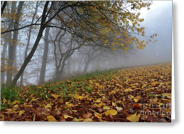Autumn Sheets Greeting Cards - Fogy Forest In The Morning 2 Greeting Card by Bruno Santoro