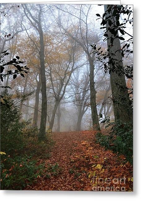 Autumn Sheets Greeting Cards - Fogy Forest In The Morning 3 Greeting Card by Bruno Santoro