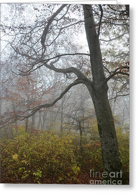 Autumn Sheets Greeting Cards - Fogy Forest In The Morning 4 Greeting Card by Bruno Santoro