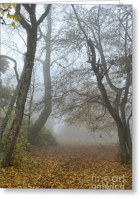 Autumn Sheets Greeting Cards - Fogy Forest In The Morning Greeting Card by Bruno Santoro
