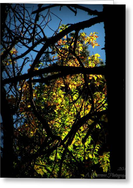 Prescott Greeting Cards - Foliage Through the Branches Greeting Card by Aaron Burrows