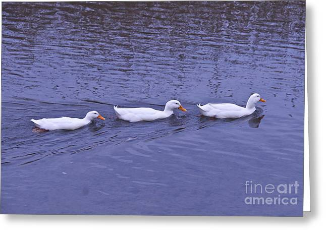 Marsh Greeting Cards - Follow Me Greeting Card by Cindy Lee Longhini