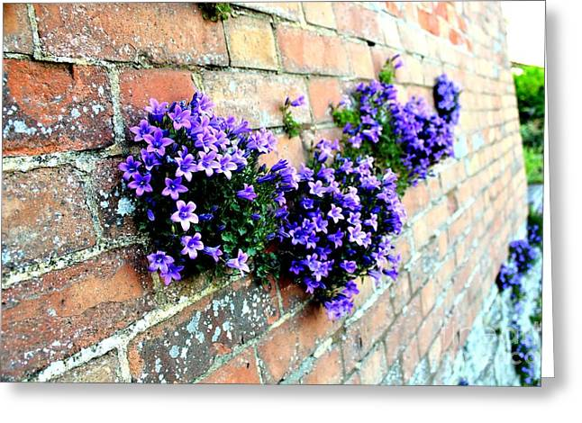 Follow The Flower Brick Wall Greeting Card by Rene Triay Photography