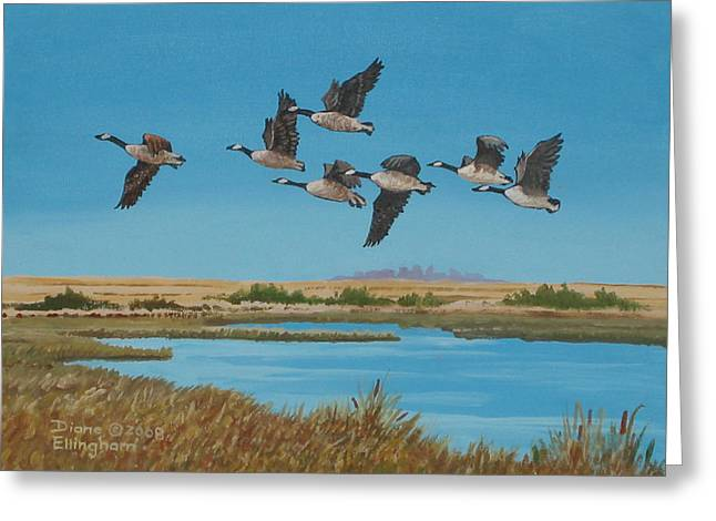 Geese Drawings Greeting Cards - Follow The Leader Greeting Card by Diane Ellingham
