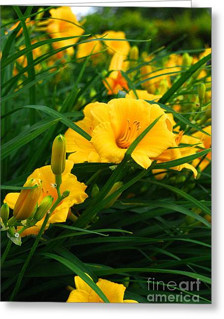 Day Lilly Greeting Cards - Follow the Yellow Brick Road Greeting Card by Linda Mesibov
