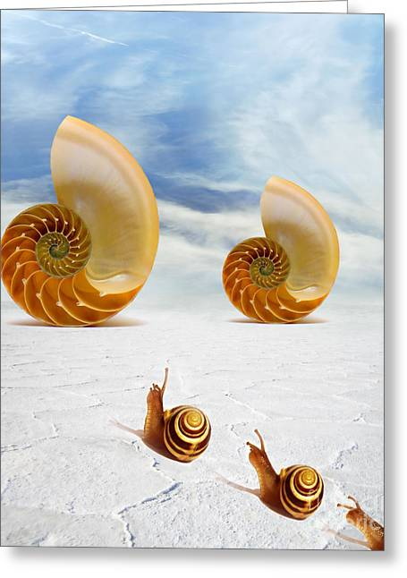 Seashell Digital Art Greeting Cards - Follow your Dreams Greeting Card by Photodream Art