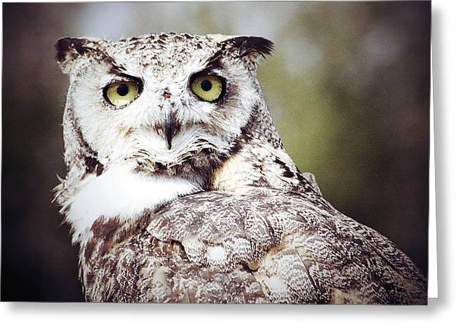 Edmonton Photographer Greeting Cards - Followed Owl Greeting Card by Jerry Cordeiro