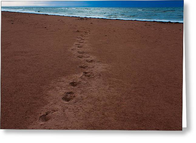 Foot Prints to the Sea Greeting Card by Matt Dobson