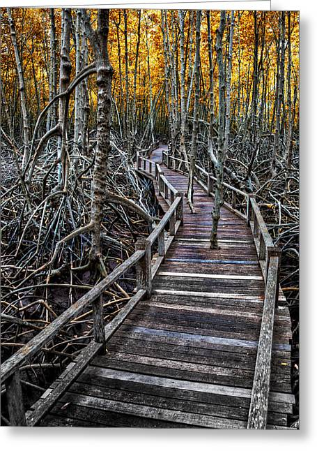 Tree Roots Greeting Cards - Footpath in mangrove forest Greeting Card by Adrian Evans
