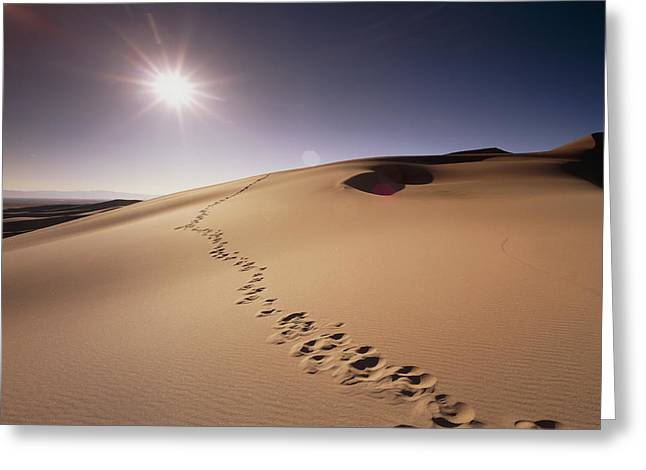Desertification Greeting Cards - Footprints Over Sand Dunes Greeting Card by Jeremy Walker