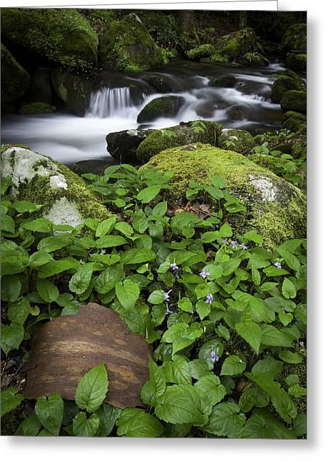 Stream Prints Greeting Cards - For Eliot Greeting Card by Rob Travis