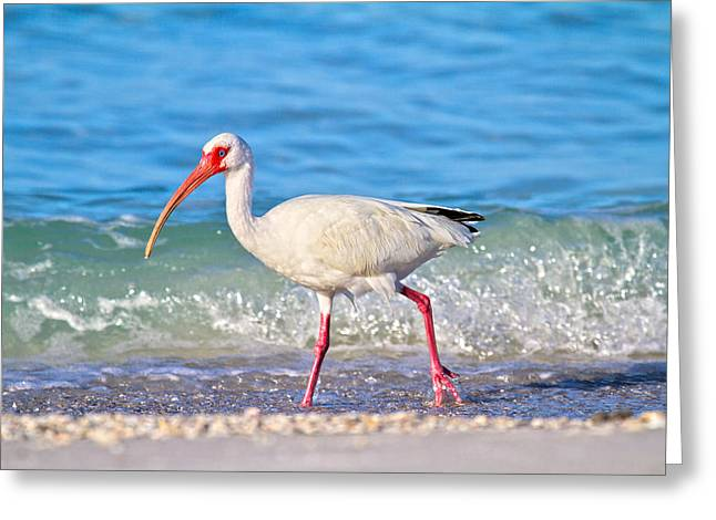 Vacation Spots Greeting Cards - For the Birds Greeting Card by Betsy C  Knapp