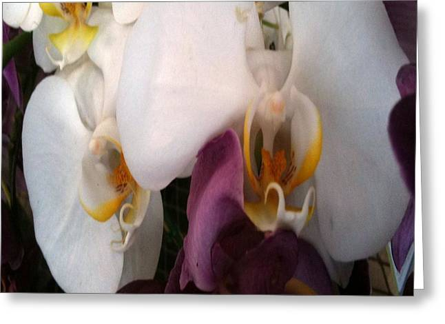 Observer Greeting Cards - For the Love of Orchids Greeting Card by Fania Simon
