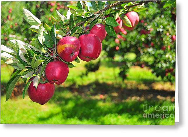 Forbidden Fruit Greeting Cards - Forbidden Fruit Greeting Card by Catherine Reusch  Daley