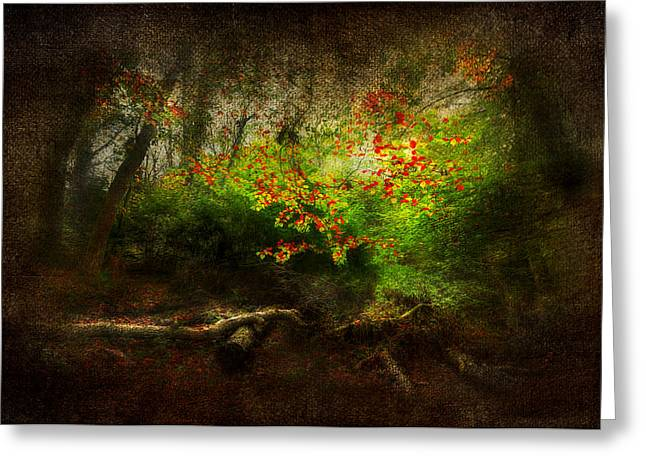 Nature Scene Digital Greeting Cards - Forbidden Woods Greeting Card by Svetlana Sewell