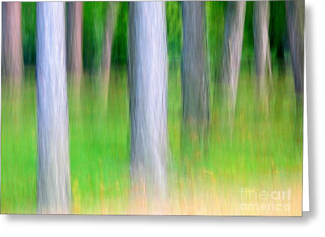 Pink Black Tree Rainbow Photographs Greeting Cards - Forest abstract Greeting Card by Odon Czintos