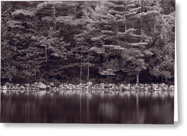 Jordan Photographs Greeting Cards - Forest At Jordan Pond Acadia BW Greeting Card by Steve Gadomski