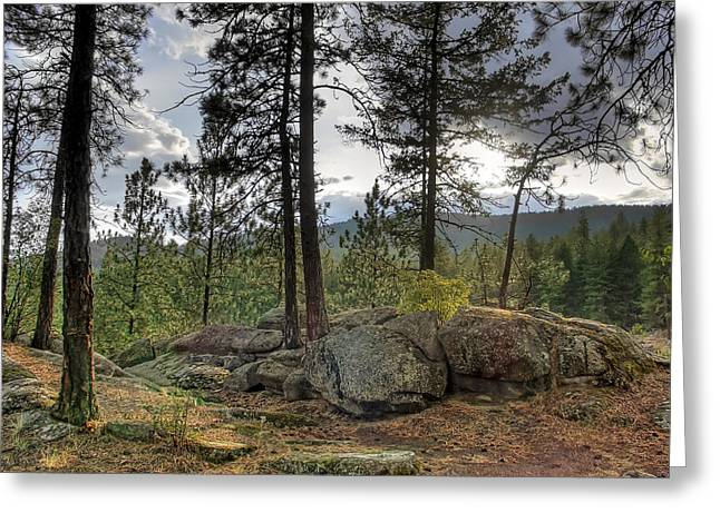 Pine Needles Greeting Cards - FOREST BOULDER FORMATION near RED LAKE WASHINGTON Greeting Card by Daniel Hagerman