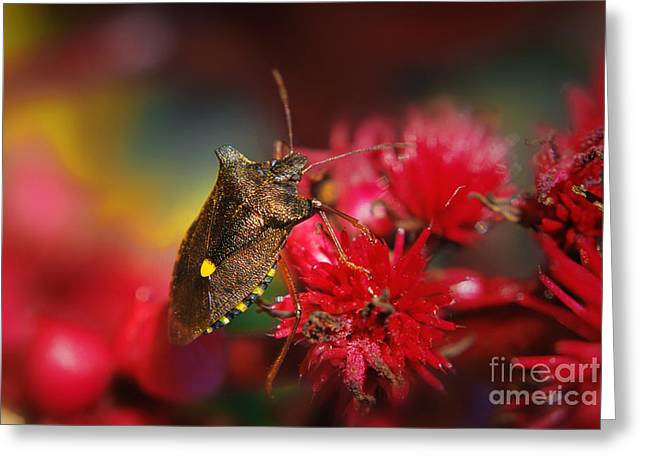 Gold Bug Greeting Cards - Forest Bug - Pentatoma Rufipes Greeting Card by Yhun Suarez