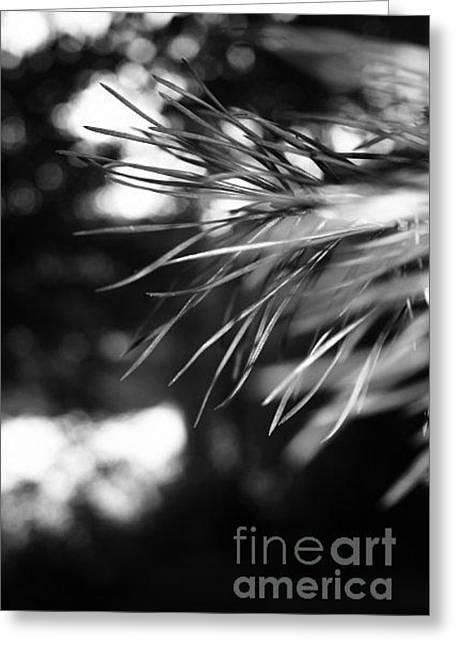 Forest By Night Greeting Card by Derya  Aktas