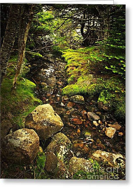 Secluded Greeting Cards - Forest creek Greeting Card by Elena Elisseeva