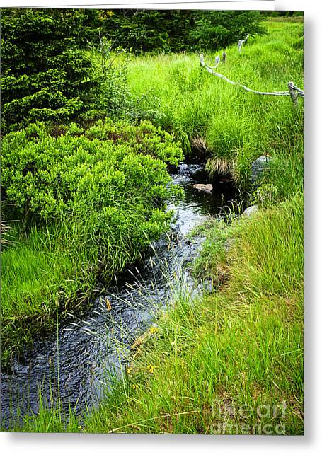 Creek Greeting Cards - Forest creek in Newfoundland Greeting Card by Elena Elisseeva